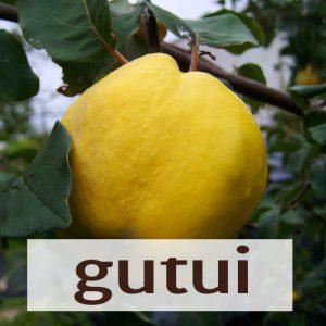 Gutui