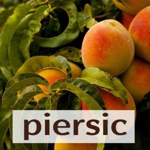 Piersic